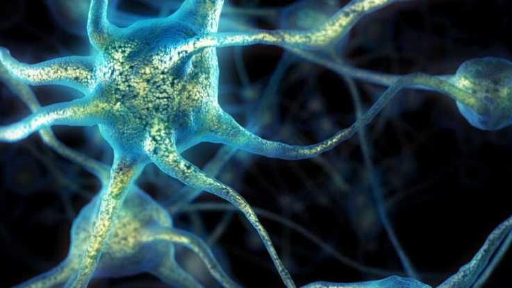 Нервная система человека_Психическая система