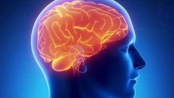 Человеческий мозг_Интересные факты о мозге