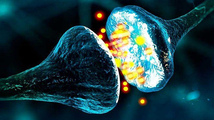 Химический синапс